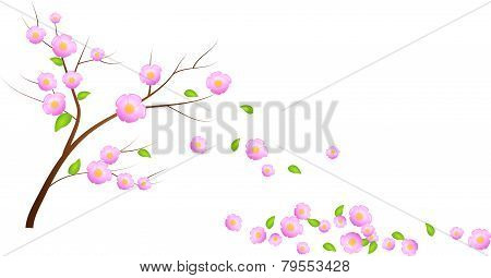 Bloom Cherry Tree With Falling Leaves