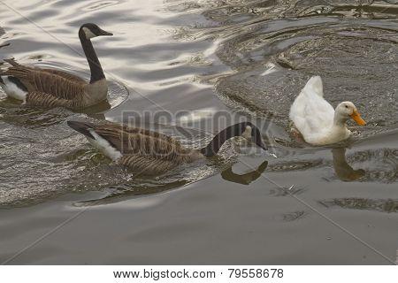 Wild Bird Territoriality
