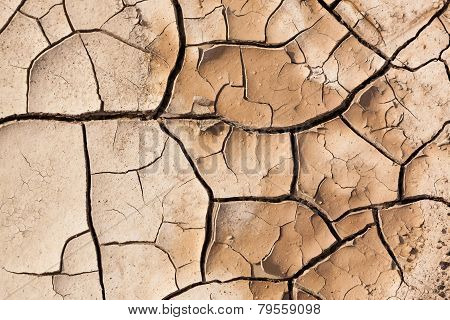 Muddy Cracked Earth
