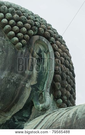 Ear of The Great Buddha (daibutsu)