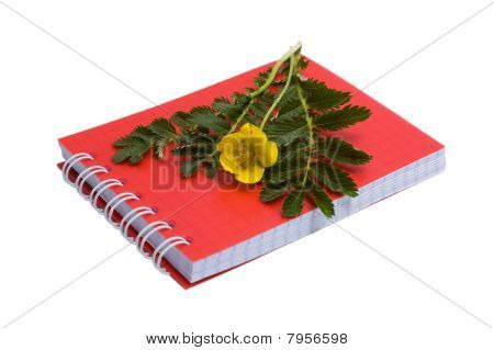 Silverweed And Notebook
