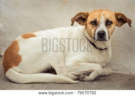 Stray dog abandoned on the street