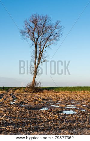 Solitary Tree Against A Blue Sky