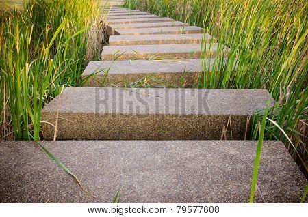 Terrazzo Floor Walk Way In Garden