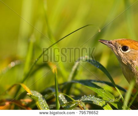 Bird In A Green Grass Among The Sun And The Nature