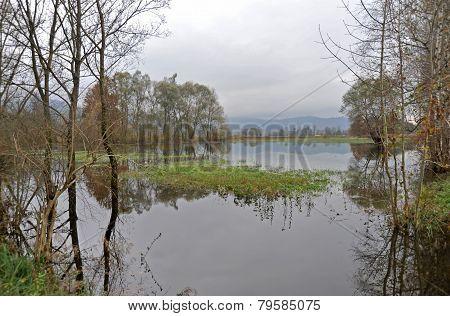 Ljubljana marsh