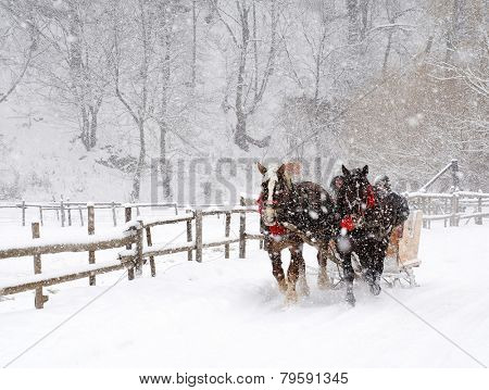 Horse pulled sledge in the Transylvanian Alps, Romania