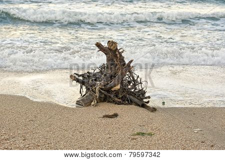 Snag On The Sea Shore