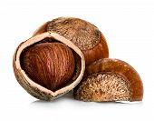 stock photo of hazelnut tree  - Hazelnuts close - JPG