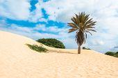 image of dune  - Waves on sand dunes in Chaves beach Praia de Chaves in Boavista Cape Verde  - JPG