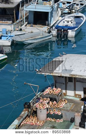 Conch shells on boat in Nassau harbor