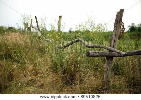 Fence On A Heathland