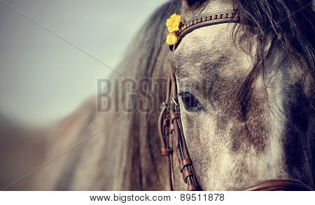 Portrait Of A Sports Stallion