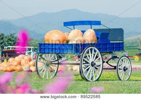 Blue Wagon Full Of Pumpkins In Farm