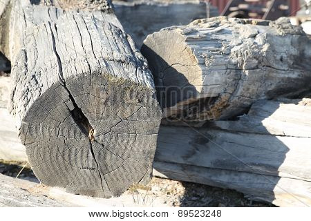 Very Old Wooden Logs
