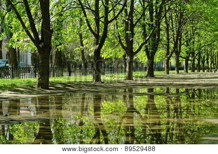 Beautiful Trees Reflected In A Puddle