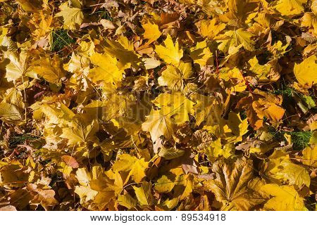 Autumn Pattern Of Yellow Leaves On The Ground. Leaf Fall In The Park.