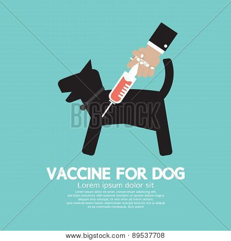 Dog's Vaccine To Prevent Illness.