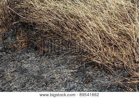 Burned Grass In Field