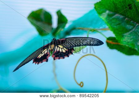 Butterfly On Leaves