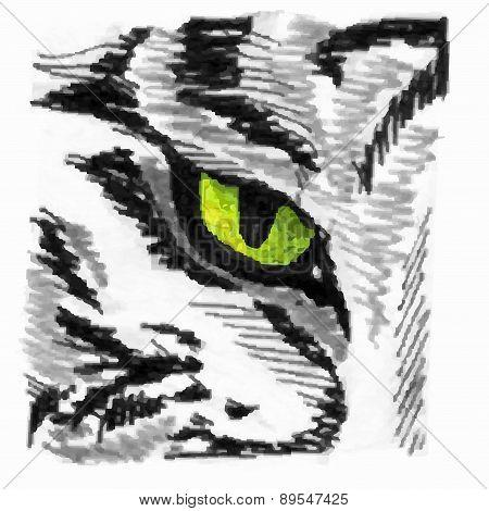 Tiger Eye Sketch