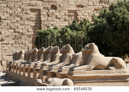 Ram-headed sphinx statues