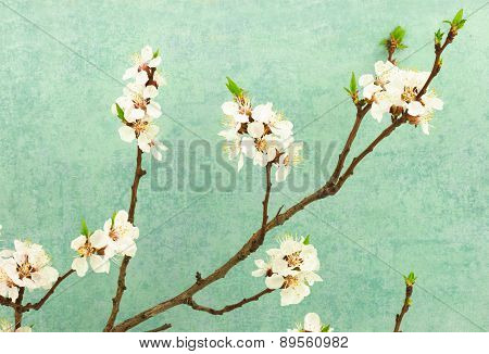 Abstract Spring Border Background With Blooming Branch