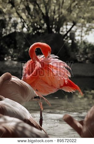 Flamingo grace