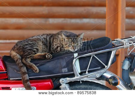 Cat sleeping on a motorcycle.