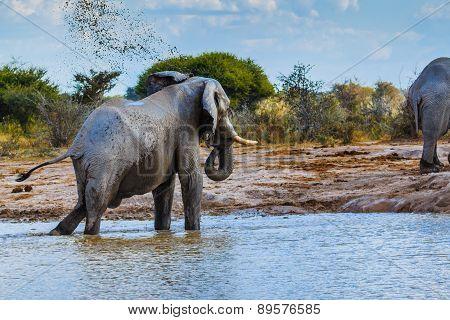 Elephant Throwing Dirt