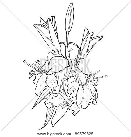 Black And White Background With Flowers Of Lily