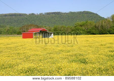 Pole Barn & Buttercups