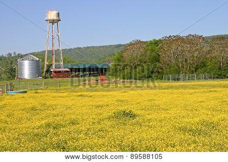 Buttercup Pasture