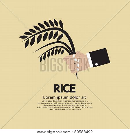 Flat Design Rice Ear In Hand.