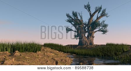 baobab tree on desert sand terrain