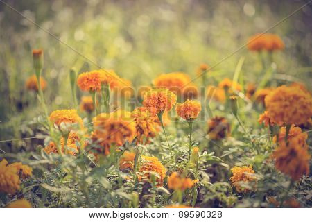 Floral Background. Flower Background