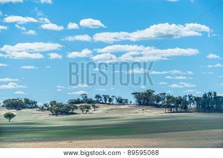Western Australian Farmland