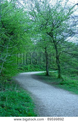 A Walk Throug The Trees