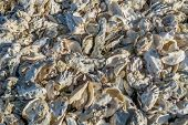 picture of oyster shell  - A pile of white oyster shells - JPG