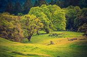 foto of mendocino  - On the Forest Edge - JPG