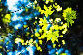 stock photo of redwood forest  - Spring First Leaves in the Forest - JPG