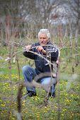 picture of prunes  - Senior man pruning grape in vineyard active retirement selective focus on face - JPG
