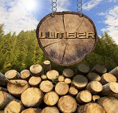 picture of section  - Trunks of trees cut and stacked and wooden sign section of tree trunk with text lumber hanging with metal chain - JPG