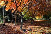 image of plaque  - Memorial plaques under deciduous trees in Autumn - JPG