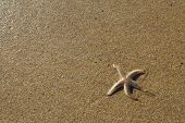 picture of echinoderms  - Starfish on the sand on a beach - JPG