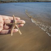 image of echinoderms  - Hold holding a Starfish on a beach - JPG