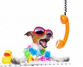 stock photo of hawaiian flower  - jack russell dog booking summer vacation holidays online using a pc computer keyboard while shooting on the phone very loud wearing sunglasses and a flower chain isolated on white background - JPG