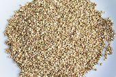 pic of buckwheat  - buckwheat  - JPG