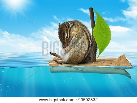 Funny Animal, Chipmunk Floating At Sea, Voyage Concept