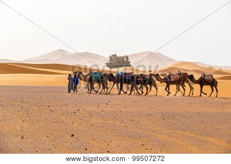MERZOUGA, MOROCCO, APRIL 13, 2015: Camels caravan on sand dunes of Erg Chebbi